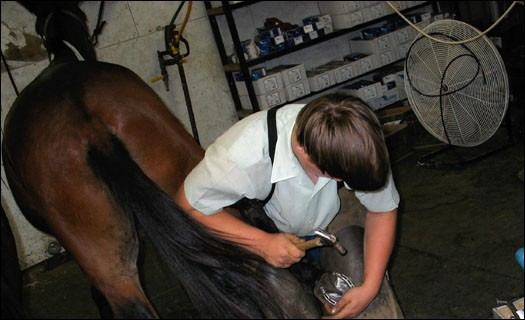 Amish Boy Shoeing Ho#229A58